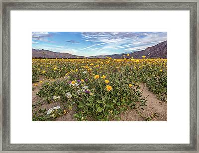 Henderson Canyon Super Bloom Framed Print