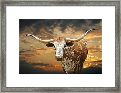 Henly Longhorn Framed Print
