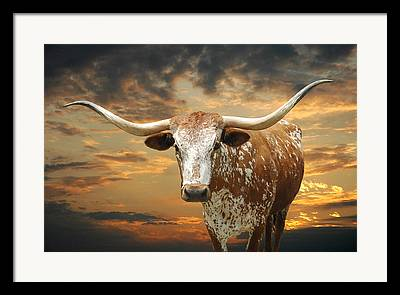 Longhorn Framed Prints