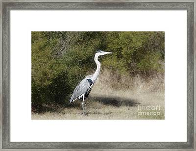 Framed Print featuring the photograph Henry The Heron by Benanne Stiens