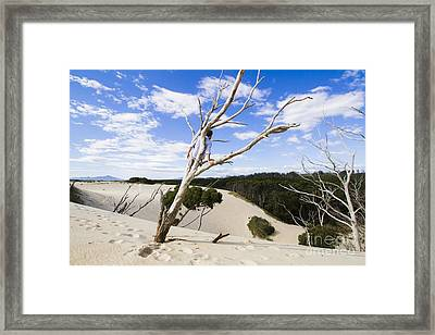 Henty Dunes Tourist Climbing Dead Tree Framed Print by Jorgo Photography - Wall Art Gallery