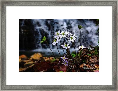 Framed Print featuring the photograph Hepatica And Waterfall by Thomas R Fletcher
