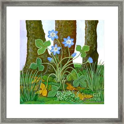 Hepatica In Bloom Framed Print by Anna Folkartanna Maciejewska-Dyba