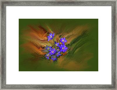 Hepatica Nobilis Painterly #h4 Framed Print