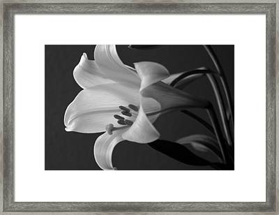 Her Name Was Lily Framed Print