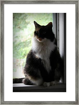 Her Window Framed Print by Mandy Shupp