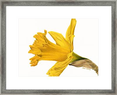 Herald Of Spring Framed Print by Sarah Batalka