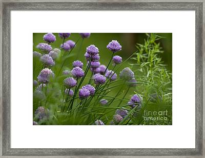 Herb Garden. Framed Print by Clare Bambers