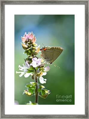Herb Visitor Framed Print by Debbie Green