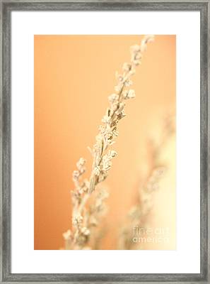 Herbs Framed Print