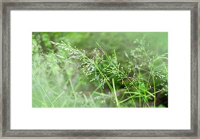 Herbs Close Up Framed Print