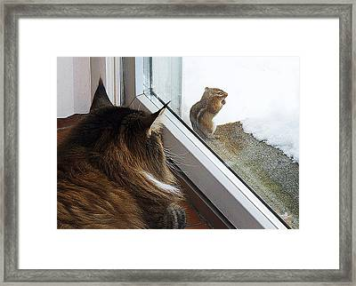 Framed Print featuring the photograph Cat And Mouse by Roger Bester