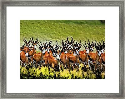 Herd 2 Framed Print by Bruce Iorio