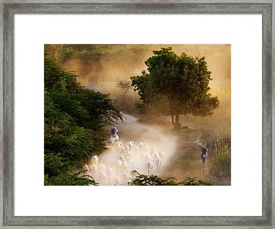 Framed Print featuring the photograph herd and farmer going home in the evening, Bagan Myanmar by Pradeep Raja Prints