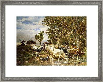 Herd Of Cows At A Drinking Pool Framed Print