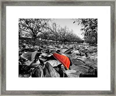 Here Comes Autumn Framed Print by Arik Baltinester