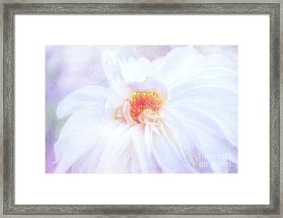 Here Comes The Bride - A Beautiful White Dahlia Framed Print