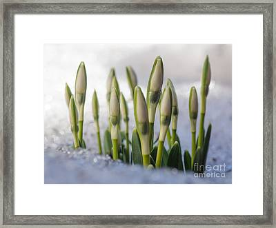 Here Comes The Spring Framed Print