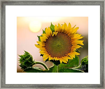 Here Comes The Sun Framed Print by Nick  Boren