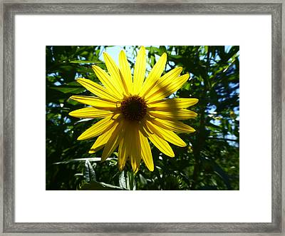 Here Comes The Sun Framed Print by Tina M Wenger