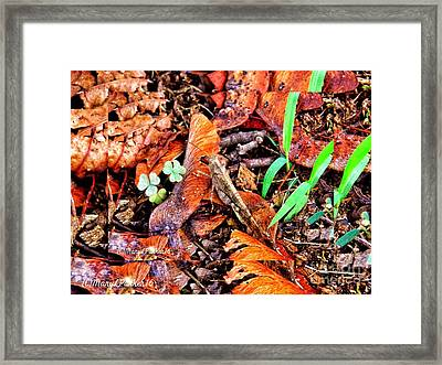 Here I  Am Framed Print by MaryLee Parker