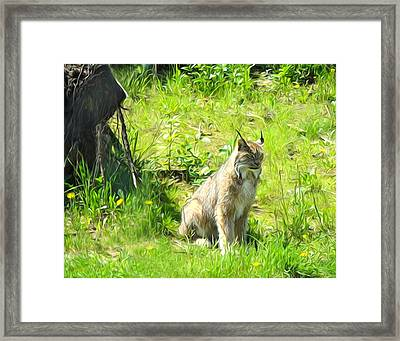 Here Kitty Kitty Framed Print by Kathy Kelly