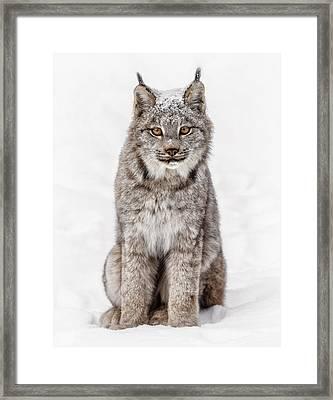 Here Kitty Kitty Kitty Framed Print