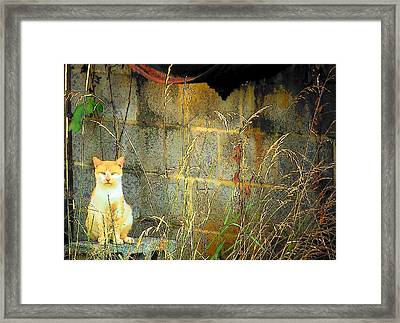 Here Kitty Kitty Kitty Framed Print by Michael L Kimble