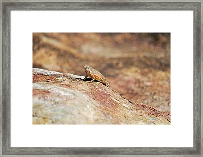 Framed Print featuring the photograph Here Lizard Lizard  by Teresa Blanton