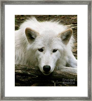 Here' S Looking At You Framed Print
