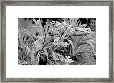 Here There Be Dragons Framed Print