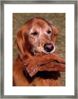 Here To Serve Framed Print by Skip Willits