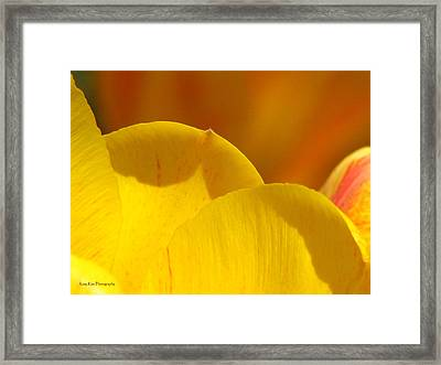 Here Within The Heart Of Spring Framed Print by Roxy Riou