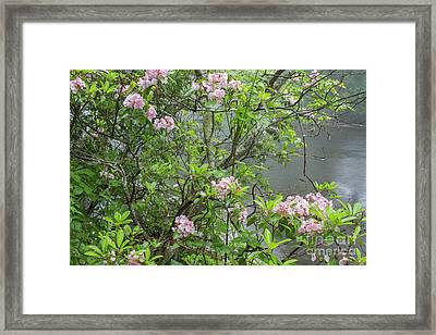 Framed Print featuring the photograph Hereford Wildlands 2 by Chris Scroggins