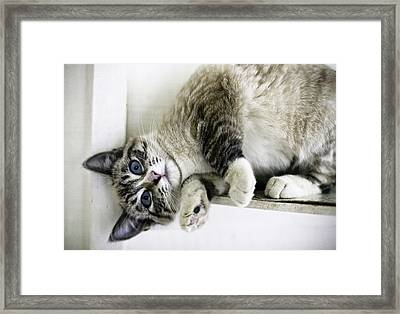 Here's Lookin' At You Framed Print by Lynn Andrews
