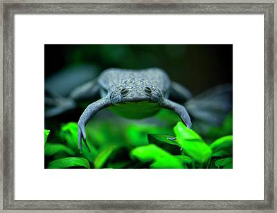 Here's Looking At You Framed Print by Christina Durity