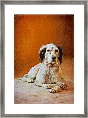 Being The Dog, English Setter  Framed Print by Flying Z Photography By Zayne Diamond