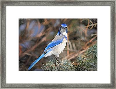 Here's Looking At You,  Kid Framed Print by Donna Kennedy