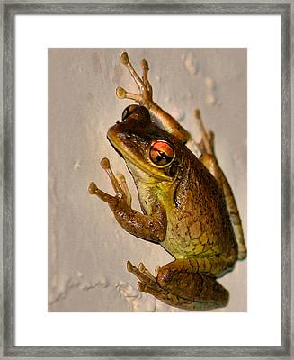Heres Looking At You Framed Print by Kristin Elmquist