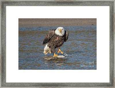 Here's Staring At You Framed Print