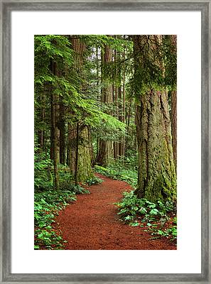 Heritage Forest 2 Framed Print by Randy Hall