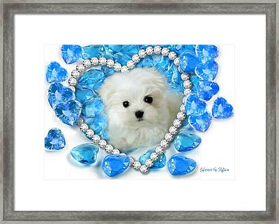Hermes The Maltese And Blue Hearts Framed Print