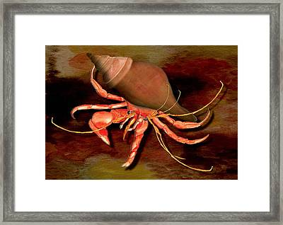 Framed Print featuring the painting Hermit Crab by Anne Beverley-Stamps