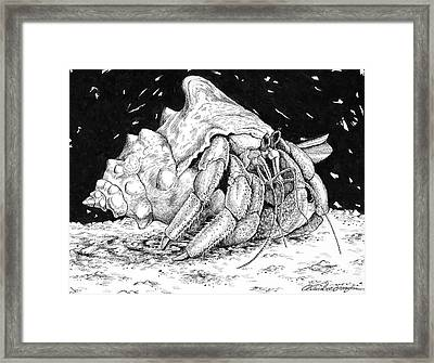 Hermit Crab Drawing Framed Print