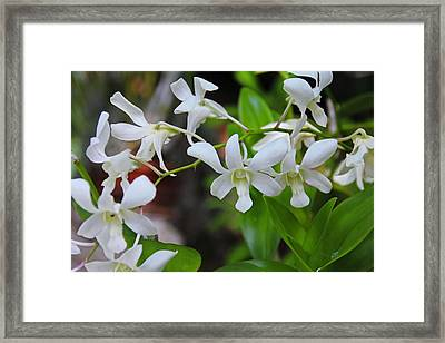 Framed Print featuring the photograph Hero Of My Heart by Michiale Schneider