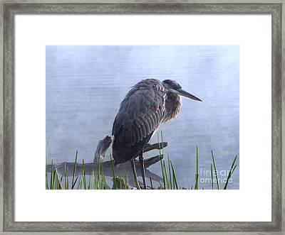 Heron 5 Framed Print