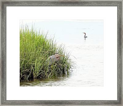 Heron And Cormorant Framed Print by Al Powell Photography USA