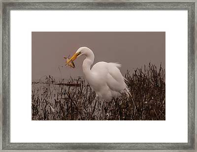 Heron And Fish Framed Print