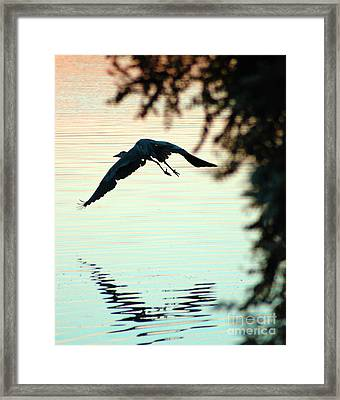 Heron At Dusk Framed Print by Clayton Bruster