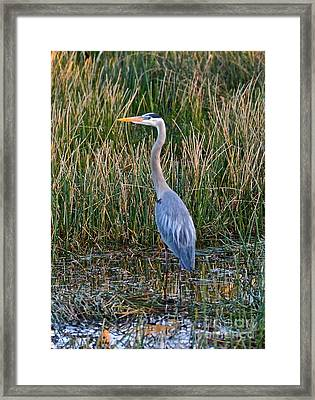 Heron At Sunset Framed Print